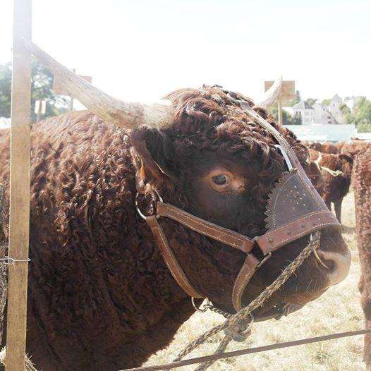 Vaches et Elevage Salers en Livradois - Page 2 Jason_doublon