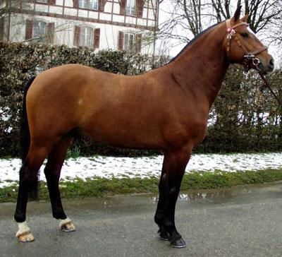 Amor por los caballos. Freiberger