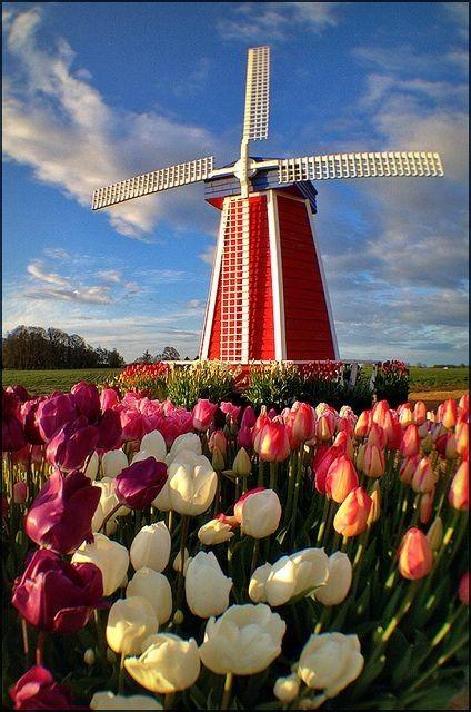 Moulins à vent, moulins à eau  C08ccec0