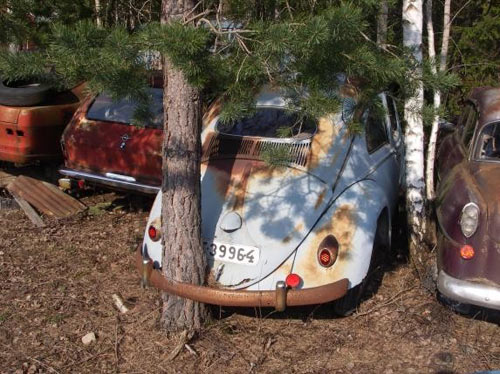 photo drole Tree-through-car
