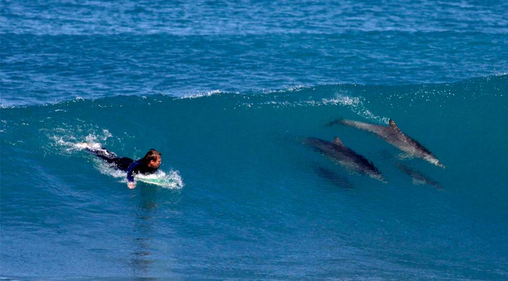 El mar azul.....la mar...sus olas Surf-con-delfines