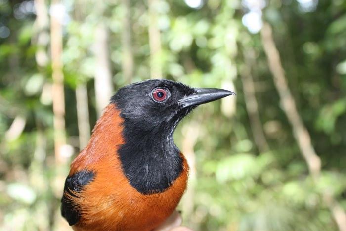 15 loài chim hiếm 04074151-f3af-419d-96e5-b9de5086208c