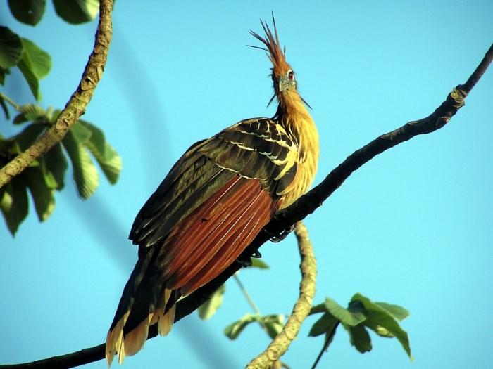 15 loài chim hiếm 0cc50325-20a7-4793-a895-f67fd689f74a