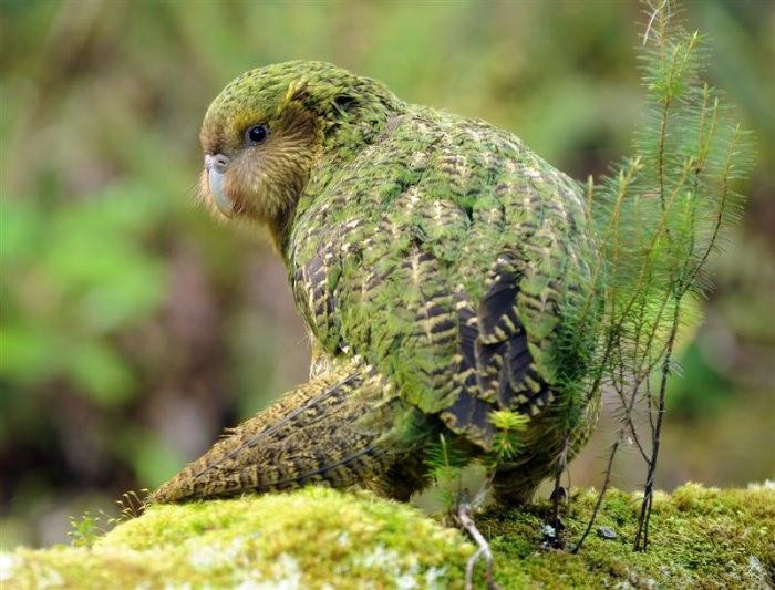 15 loài chim hiếm 4477f0aa-42a6-49db-bf9f-1037370b94e3
