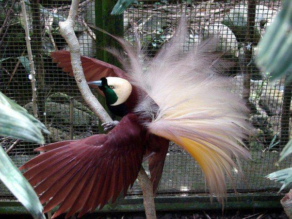 15 loài chim hiếm 4619638a-5af0-481c-a669-9f2b78645d71