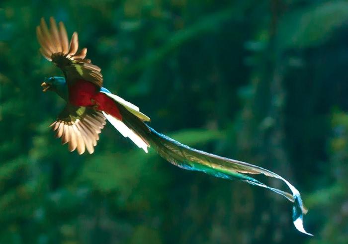15 loài chim hiếm 489f535f-6d43-4f4c-bd7b-42d33aace825