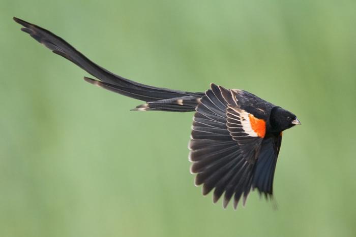 15 loài chim hiếm 4aea0f84-3061-4977-9c16-8ef674586fea
