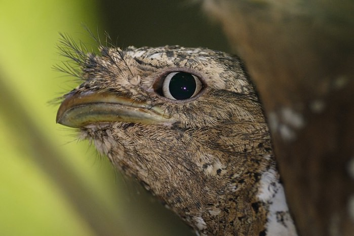 15 loài chim hiếm 7d4e1839-e0fe-4991-9ef8-f94b84156e6a