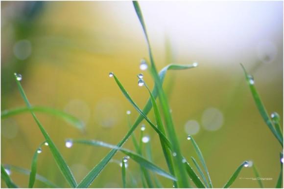 Earth Day 2019 Morning_water_pearl_VegaStar_Carpentier_Paris-e1366585737418