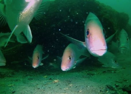 An ancient underwater forest in the Gulf of Mexico Underwater-forest-ben-raines-1