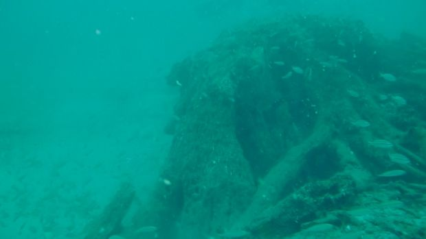 An ancient underwater forest in the Gulf of Mexico Underwater-forest-ben-raines-4