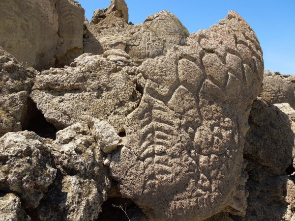 Nevada rock carvings may be oldest in North America Winnemucca_oldest_NA_petroglyphs_tree_diamonds-e1376896906169