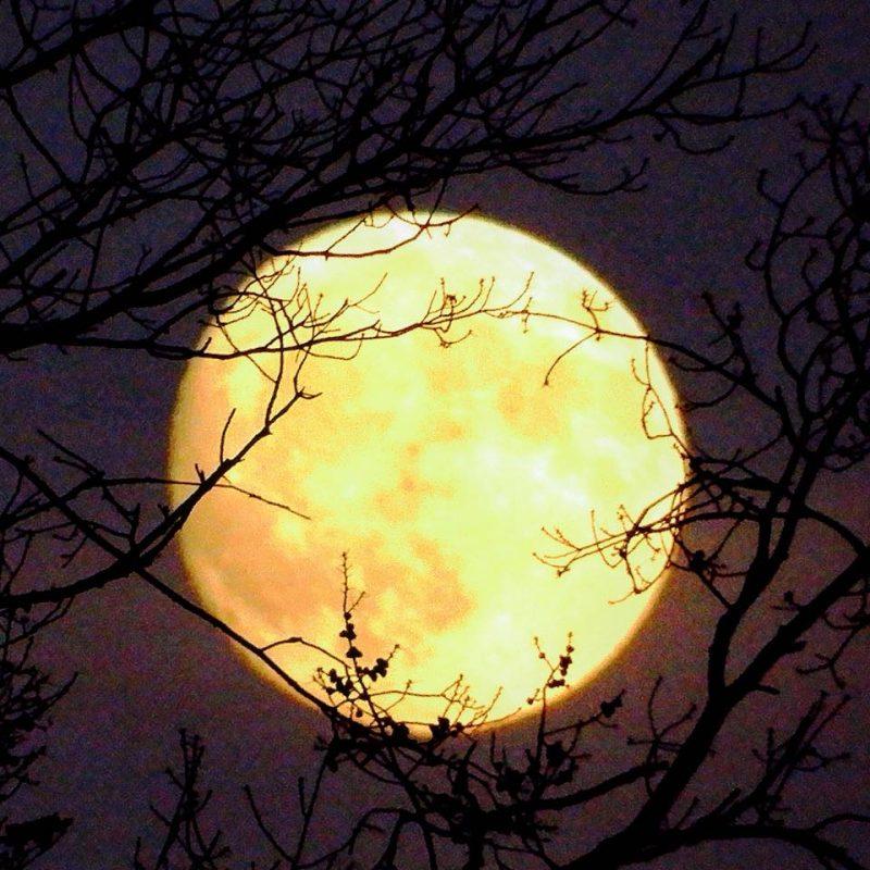 Full moon in Taurus on November 22 Beaver-moon-2017-ny-e1509827028976