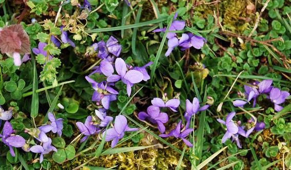 bon anniversaire violette - Page 3 Violetteblog4