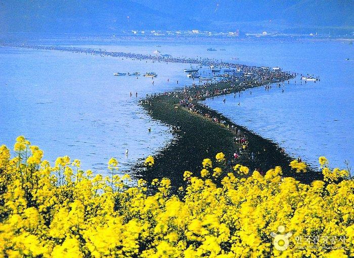 في كوريا:مهرجان لإنشقاق البحر {معجزة نبي الله موسى} 507926_image2_1