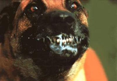 Disco favorito de Yngwie Malmsteen - Página 2 Perro-Rabioso
