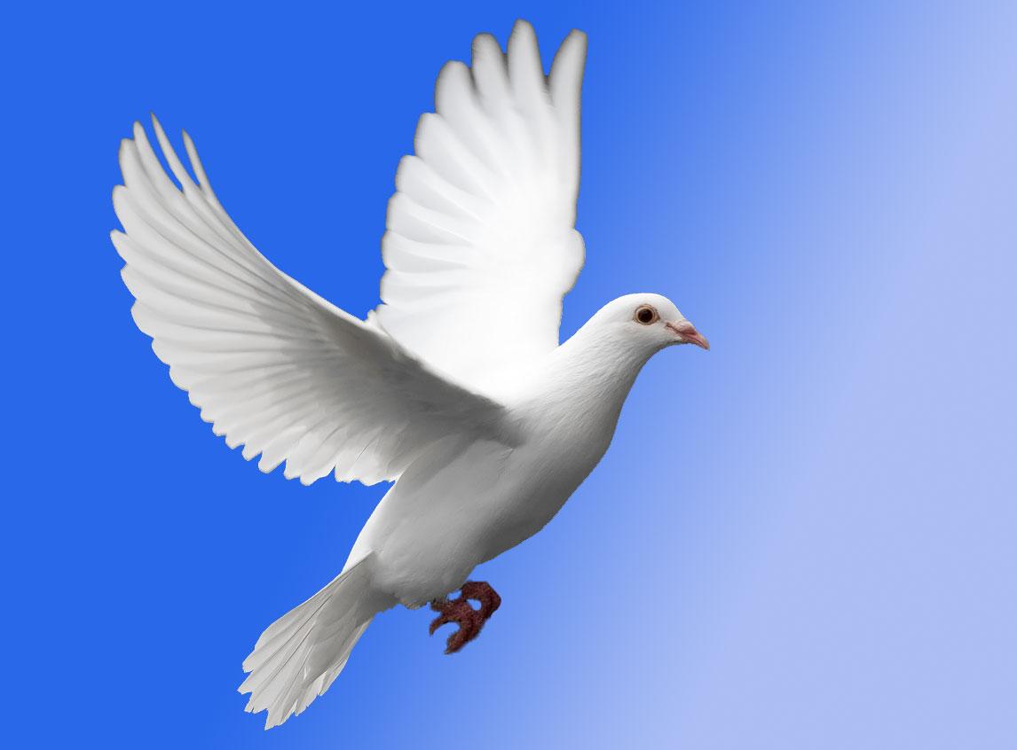 Le Symbolisme Chrétien - 19 eme siècle - Angleterre ( Images) White-dove-in-flight-976408