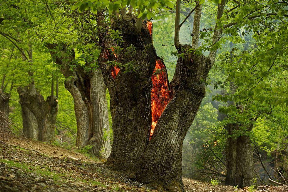 Galiza, incendios: La Xunta admite que en As Fragas do Eume han ardido 750 hectáreas.  1399402417_156917_1399404008_album_normal