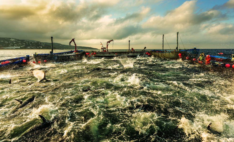 Pesca y sobreexplotación marítimo pesquera en el mundo, descartes, contradicciones, sectores, competencia intensa, Unión Europea. 1371480394_463743_1371481400_album_normal