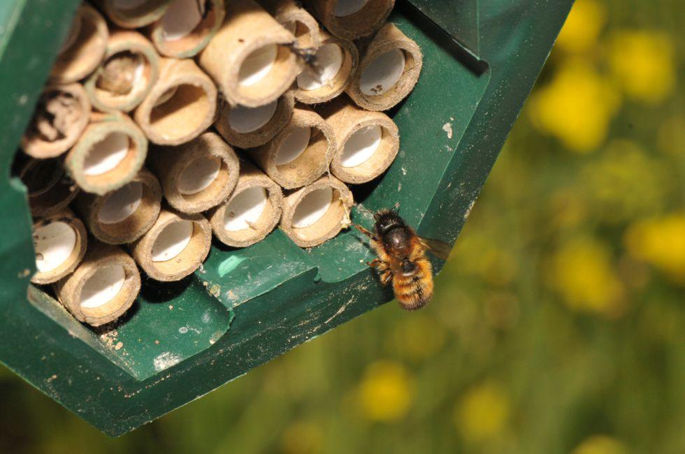El caso de las abejas desaparecidas. - Página 2 1429711416_290434_1429719331_sumario_grande