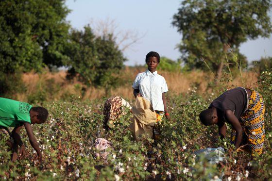 Lencería fina de algodón. Superexplotación de niñas y niños trabajando. Burkina Faso, EEUU.  1324052923_528739_1324054050_noticia_normal