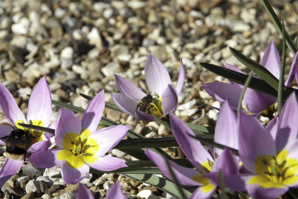 El caso de las abejas desaparecidas. 1392822117_263009_1392822585_sumario_grande