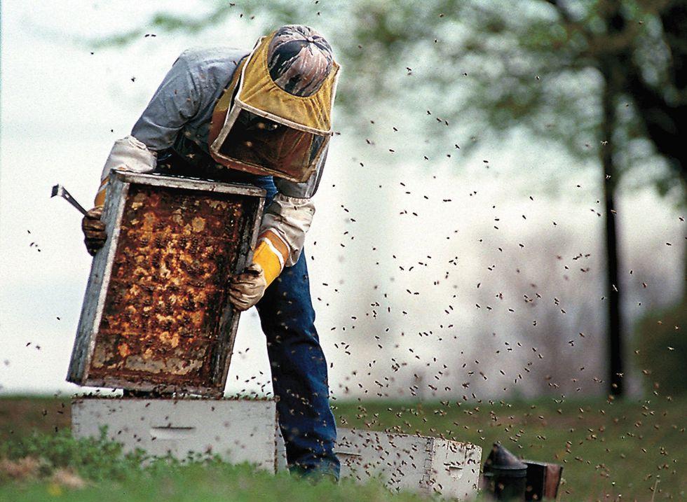 El caso de las abejas desaparecidas. - Página 2 1403876527_881093_1403876878_noticia_grande