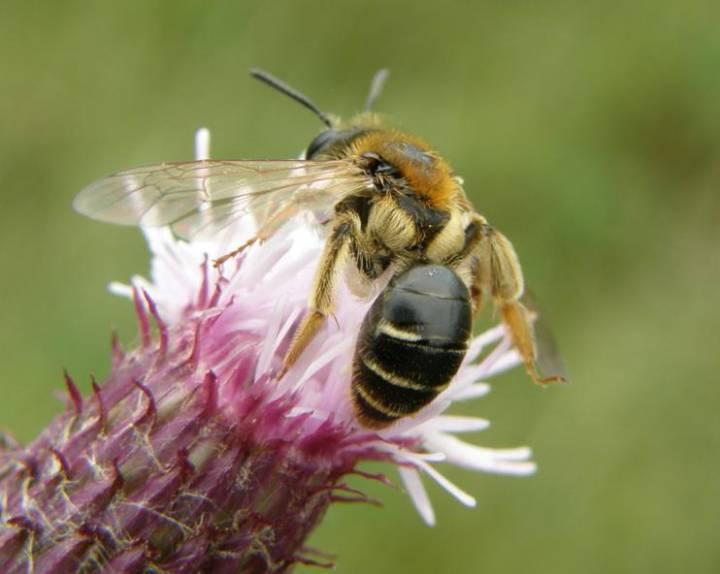 El caso de las abejas desaparecidas. - Página 2 1471356045_891982_1471360616_sumario_normal_recorte1