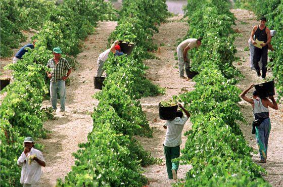 Unión Europea, España: Agricultura, PAC, Política Agraria... Clasista. 1338754100_733390_1338756513_noticia_normal