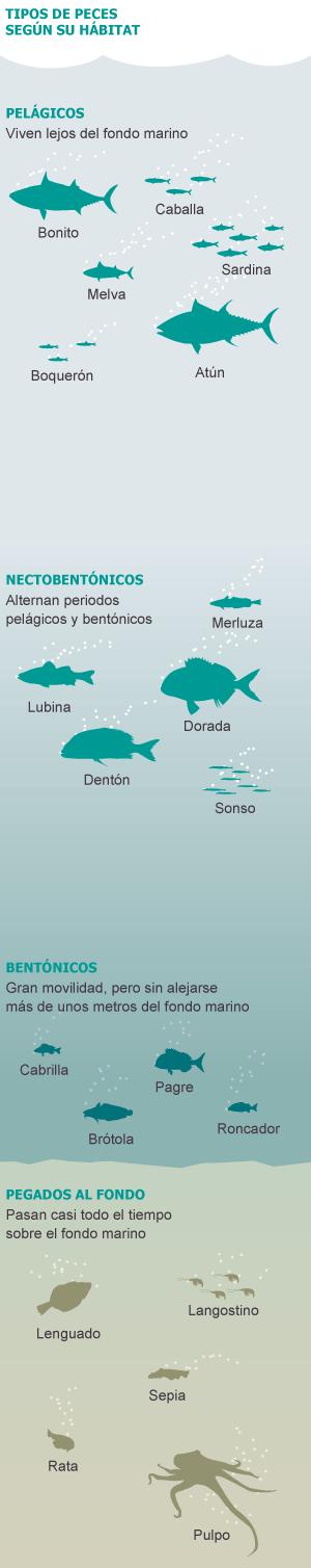 Pesca y sobreexplotación marítimo pesquera en el mundo, descartes, contradicciones, sectores, competencia intensa, Unión Europea. 1368474623_079870_1368477787_sumario_normal