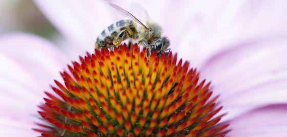 El caso de las abejas desaparecidas. - Página 2 1403882291_329326_1403883404_noticia_normal