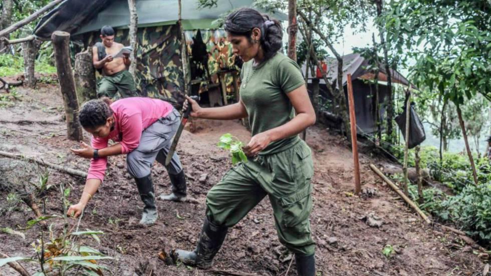 Colombia: represiones, terror, violaciones y esclavismo $. Propiedad agraria, Estado, FARC, ELN. Luchas de clases - Página 5 1482957153_822883_1483012577_noticia_fotograma