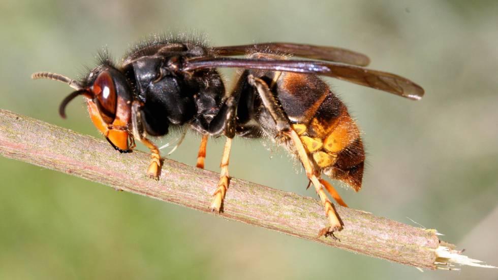 El caso de las abejas desaparecidas. - Página 3 1495644322_813378_1496209600_noticia_fotograma