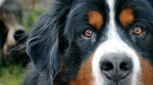 Mascotas - Página 2 Moldeado-perro