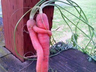 Happy Birthday Azriel!!! Carrot-love-story