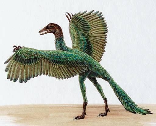 Saviez-vous que... - Page 4 Archaeopteryx