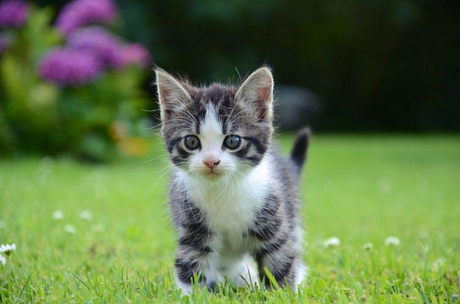 Fotos de animales de todo tipo incluyendo mascotas que más te gustan 1yv_900