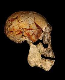Los 'Homo erectus'  no estaban solos. Los últimos vivieron en Indonesia hace 117.000 años. [Historia] 1344445126_extras_ladillos_1_4