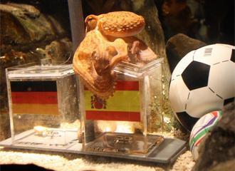 Coupe du Monde 2010 - Afrique du Sud - Page 38 1278408336_0