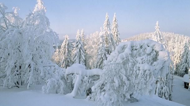 TERRAVISIÓN | Biblioteca de Países Bosque-cubierto-nieve-laponia