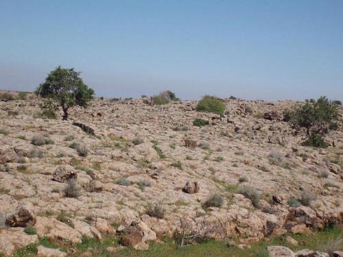 موسوعة شاملة عن المحميات الطبيعية - حصريا على منتدى واحة الإسلام - صفحة 2 112619_2010_02_14_23_26_22