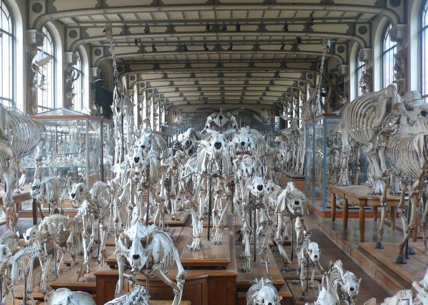 Скульптуры, памятники и монументы - Страница 5 Pal--ontologie