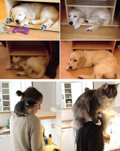 CATS!!!!!!!!!!!! Tumblr_n1a6a5auzx1qewacoo6_r1_500-398x500