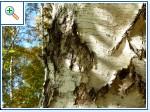 """Сидельникова Елена. Мастерская """"Волшебство Уральских гор"""" . - Страница 6 C7199a01d59f1f42eebe034deac21bae2ea744131122075"""