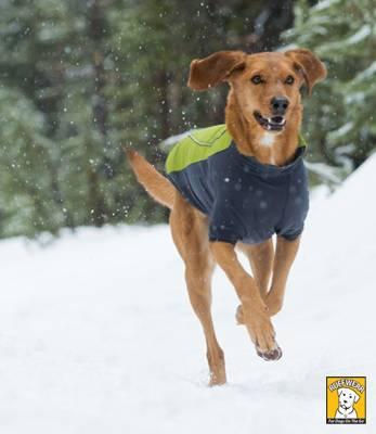 Магазин DOGS ACTIVE проф.амуниция для собак 70d597185c48496dac15a288ab8ffd0425cca7168135372