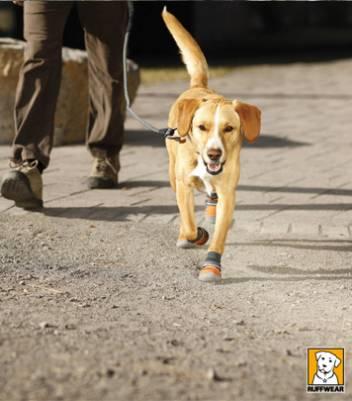 Магазин DOGS ACTIVE проф.амуниция для собак D4161d6f3e752fab9bf6dce215da327025cca7168135373