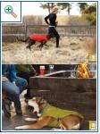 Магазин DOGS ACTIVE проф.амуниция для собак 065ed4dcc8cdfb4bb2e423cb8e17737325cca7163798891