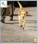 Магазин DOGS ACTIVE профессиональная амуниция для собак A537dc9b03135097a6c7e39f4f745fe625cca7168309267