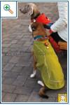 Магазин DOGS ACTIVE профессиональная амуниция для собак B28e35e25bfd79cb5d8972925f6cf29825cca7163971576