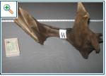 Коряги для аквариума и террариума. B3337dfb75c8f6351154d1703ad07ed85f6aa2165455153